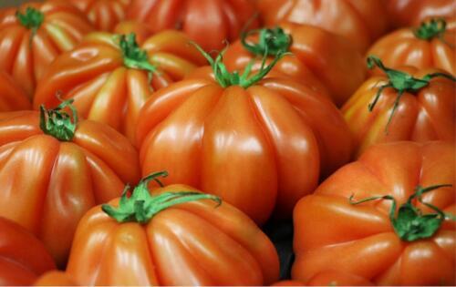 tomato-2608618 1280